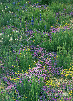 Spring Wildflowers  by Ruth Housley