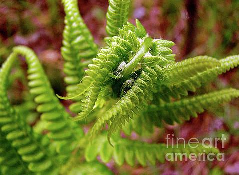 Spring Wonder by Betsy Zimmerli