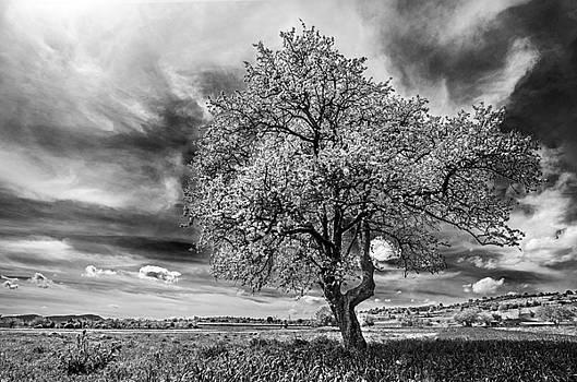 Springfield by Ivan Vukelic