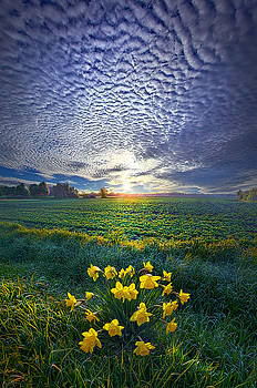 Springing to Life by Phil Koch