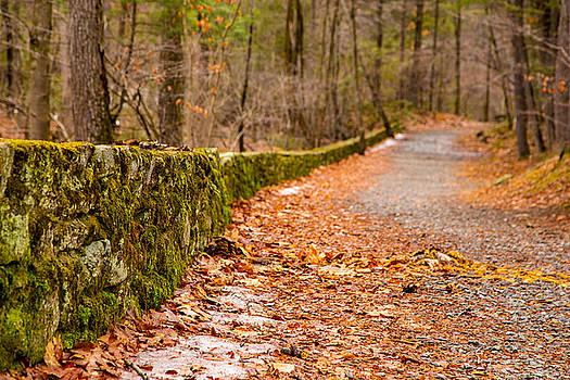 Karol Livote - Springs Path