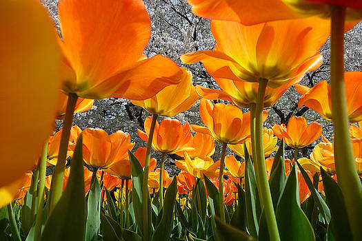 Springtime At Longwood Gardens 2015 by Dan Myers