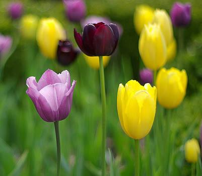 Springtime Glory by Linda Mishler