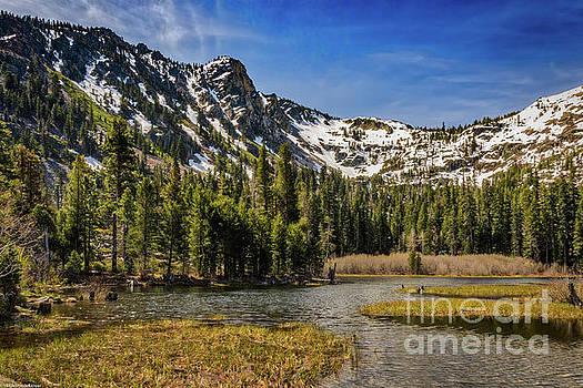 Springtime In The High Sierras by Mitch Shindelbower