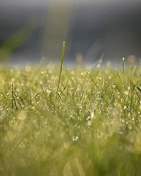 SpringTime by Nikki McInnes