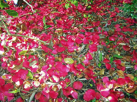 Patricia Taylor - Springtime Pink Petals