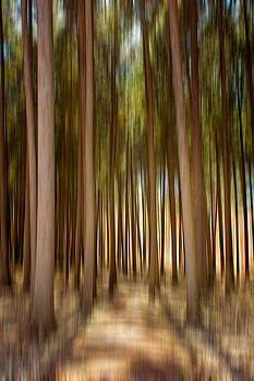 Spruce Forest Blur by Jackie Novak