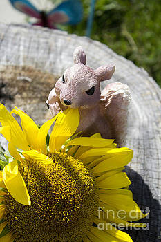 Squirrel and Sun Flower by Tara Lynn