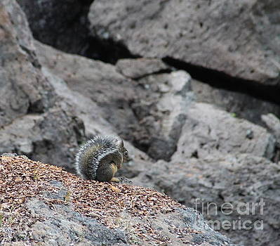 Squirrel at Sparks Lake do not make me jump by Marie Neder