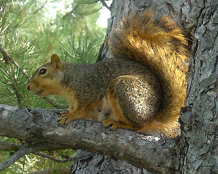 Squirrel by D Winston