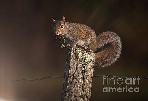 Squirrel III by Douglas Stucky