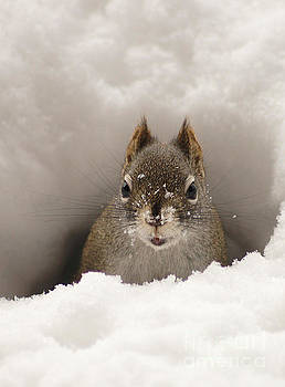 Squirrel In A Snow Tunnel by Stanza Widen