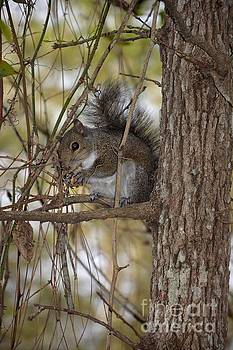 Squirrel by Janice Spivey