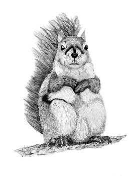 Squirrel by John Stuart Webbstock