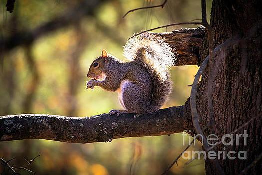 Squirrel Lunch  by JW Hanley