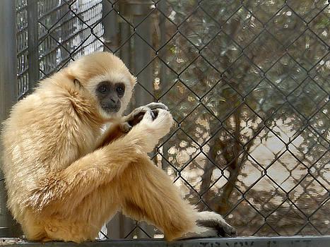 Jeff Brunton - Squirrel Monkey 1