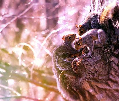 Squirrels - A Family Affair III by Aurelio Zucco