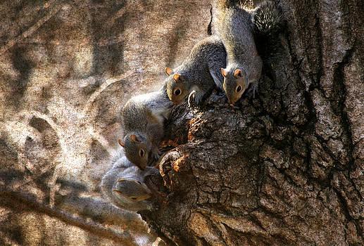 Squirrels - A Family Affair IX by Aurelio Zucco