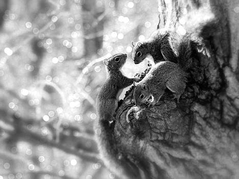 Squirrels - A Family Affair V by Aurelio Zucco