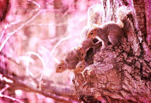 Squirrels - A Family Affair VIII by Aurelio Zucco