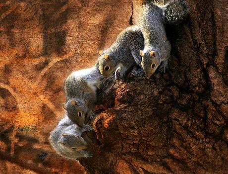 Squirrels - A Family Affair X by Aurelio Zucco