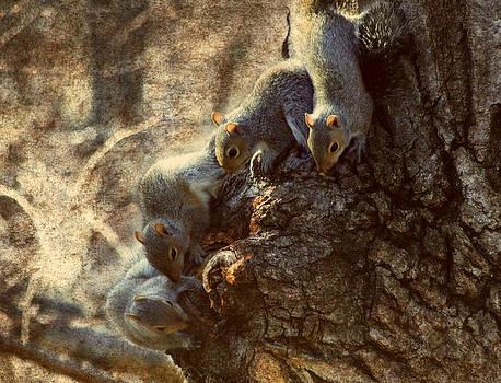 Squirrels - A Family Affair XI by Aurelio Zucco