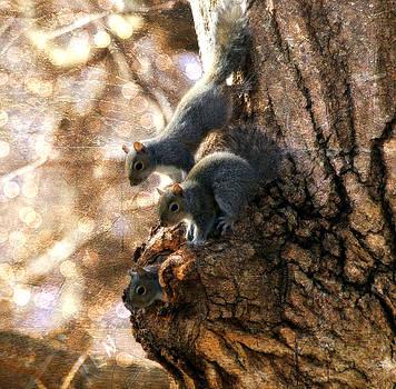 Squirrels - A Family Affair XII by Aurelio Zucco