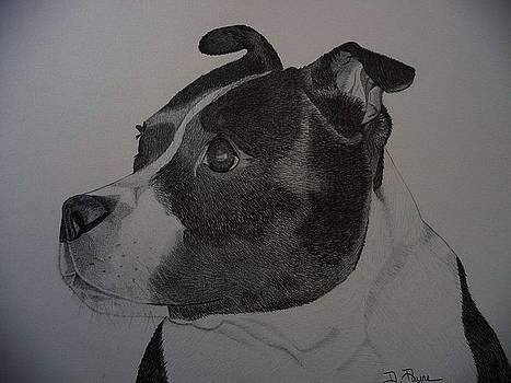 Staffie the Dog by Debbie Payne