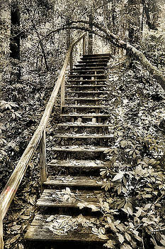 Stairway to the unknown by Gulf Island Photography and Images