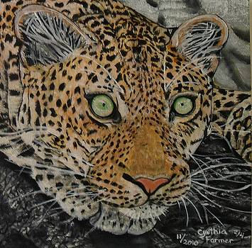Stalking Leopard by Cynthia Farmer