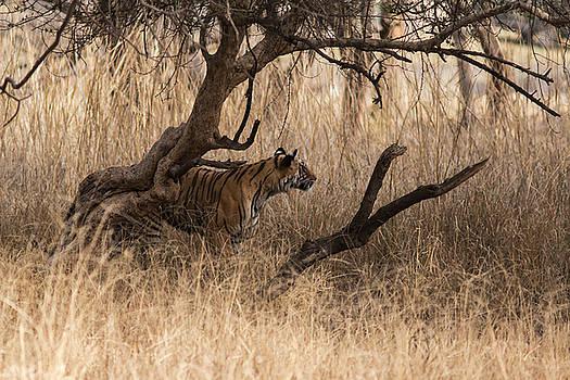 Stalking by Ramabhadran Thirupattur