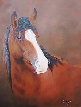 Stallion portrait by Jean Yves Crispo