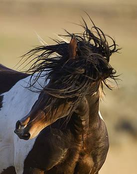 Stallion's Head Shake by Carol Walker