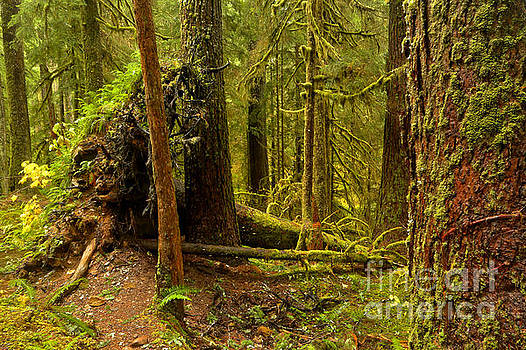 Standing And Fallen by Adam Jewell