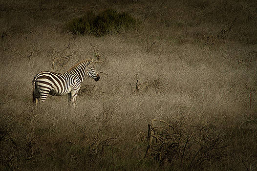 Standing in The Light by Roger Mullenhour