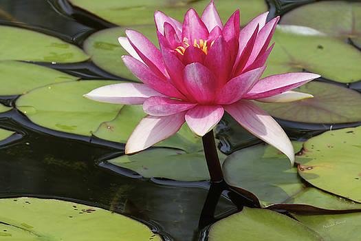 Deborah Benoit - Standing Tall In The Pond