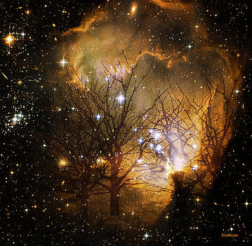 Star Clusters Through the Trees by Ericamaxine Price