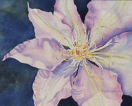 Star Shine by Mary Haley-Rocks