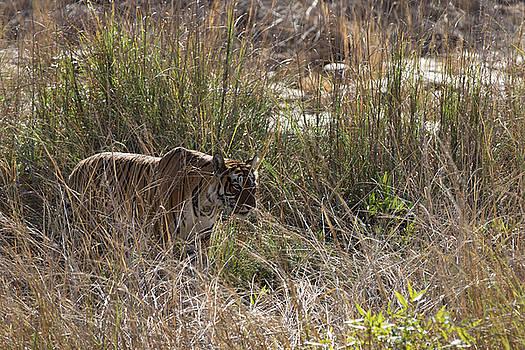 Stare through the blades of the grass by Ramabhadran Thirupattur