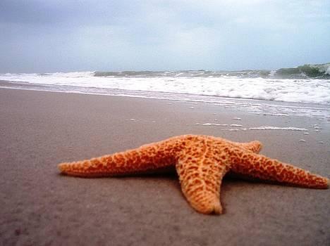 Starfish Beach by Anna Villarreal Garbis