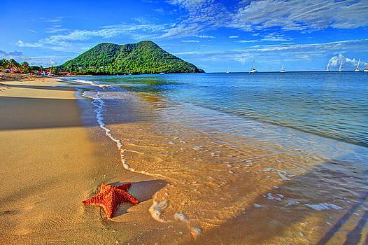 Starfish Beach by Scott Mahon