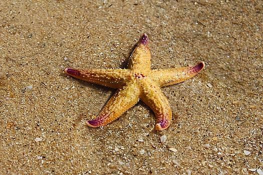 Starfish by Mamie Thornbrue