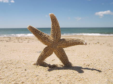 Starfish by Mark Siciliano