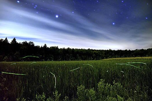 Starlight and Fireflies by Geoffrey Coelho