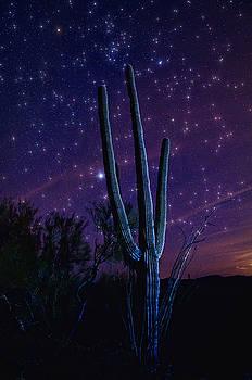 Saija  Lehtonen - Starry Starry Sonoran Skies