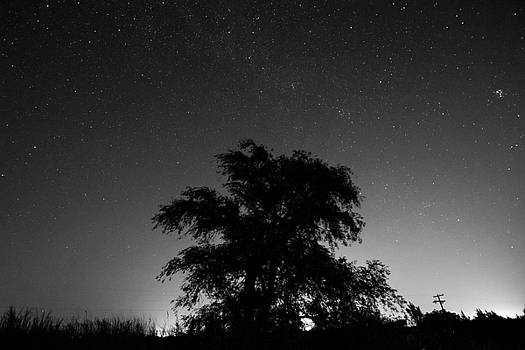 Stars and Tree by Nathan Hillis