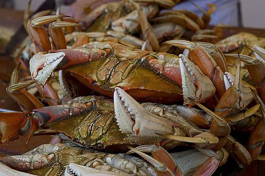 Steamed Crab by Randy Bayne