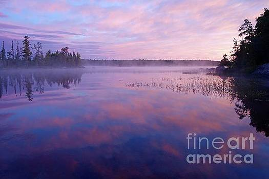 Steamy Pinks by Sandra Updyke