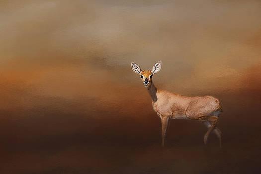 Steenbok. by Lyn Darlington