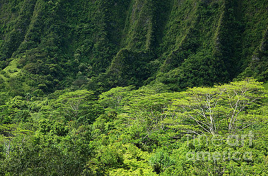 Steep Cliffs of Ko'olau Mountains by Charmian Vistaunet